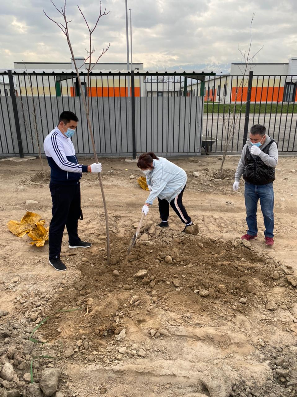 Сотрудники Государственного ансамбля танца РК «Салтанат» посадили деревья на территории детской больницы